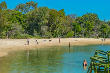 Take Your Dog To The Noosa River Mouth Dog Beach