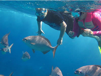 Two Cozumel Snorkelers Watching a Large School of Fish