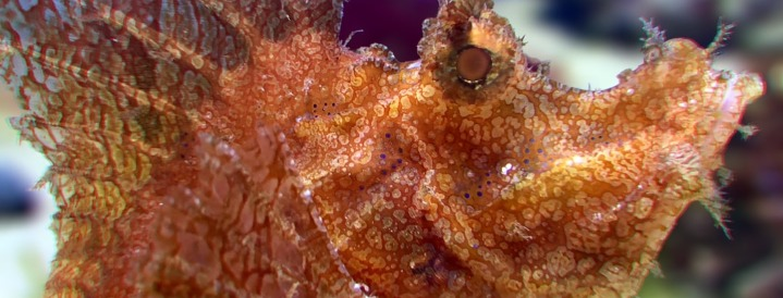 Monterey Bay Aquarium's Seahorses for