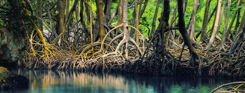 mangroves Dominican republic