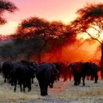 Tanzania visitors guide
