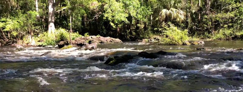 Florida State Parks in the Tampa Area