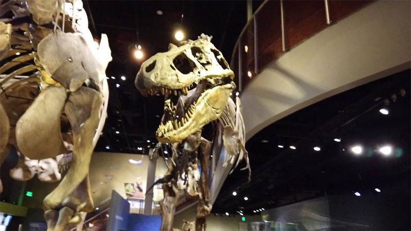 Perot Museum in Dallas, Texas - Museum of Nature and Science