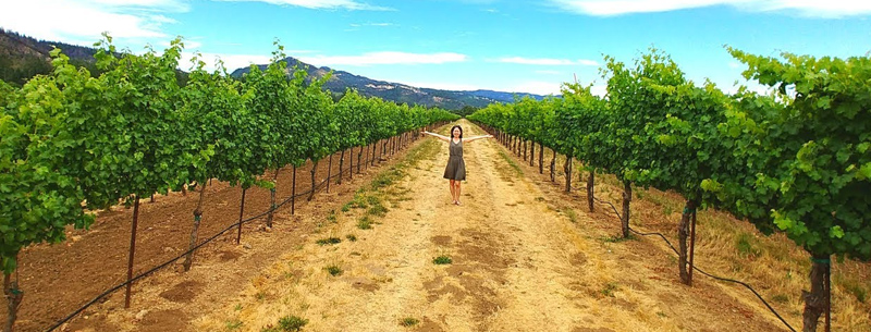 sonoma county wine tours