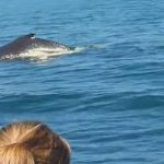 Best Places Whale Watching