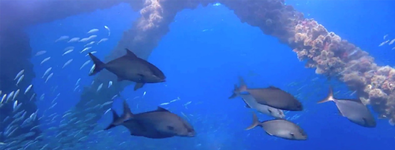Scuba Diving & Snorkeling in South Padre Island