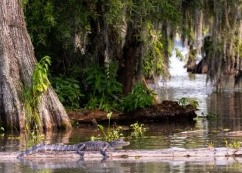 Top 10 Most Beautiful Places In Louisiana